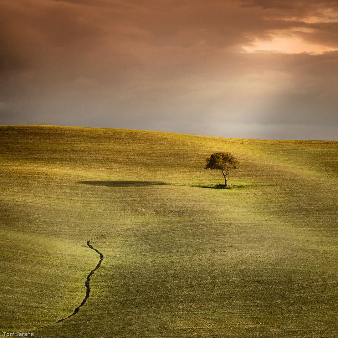Tuscan Tree v3